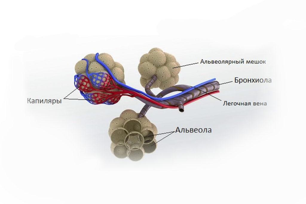 Альвеолярный микролитиаз - причины, лечение