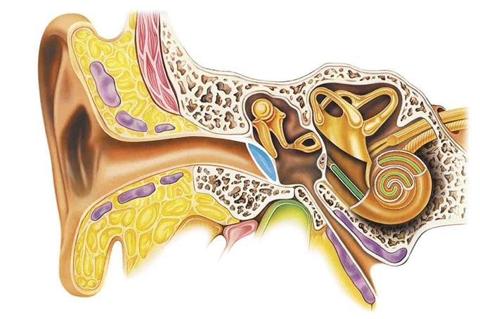 Параганглиома среднего уха - причины, симптомы