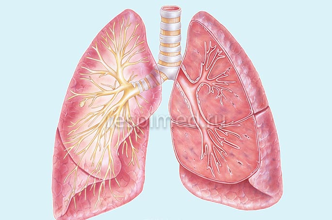 Симптомы диффузного пневмосклероза