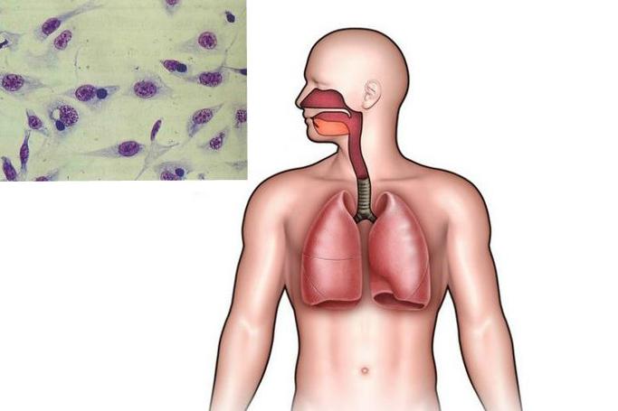 Как правильно лечить хламидийную пневмонию